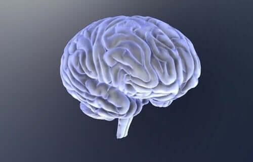두뇌 3D입체