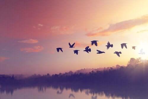 날아가는 토우 새