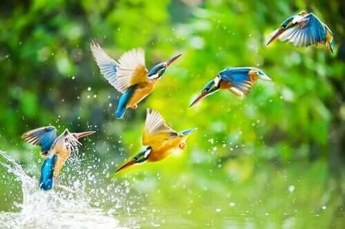 토우 새와 물