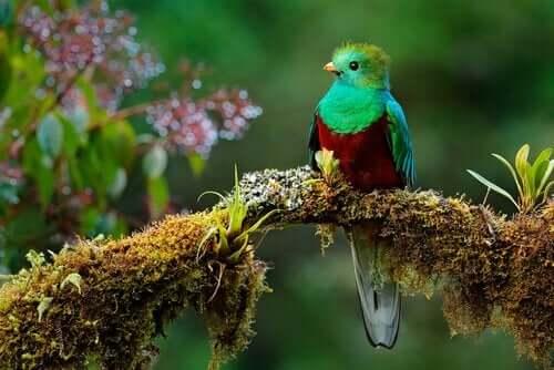 토우 새의 전설: 겸손에 대한 교훈