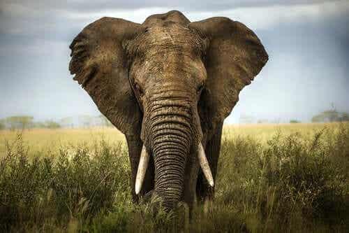 6명의 맹인과 코끼리 이야기: 타인의 의견을 존중하기
