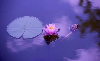 스트레스 관리를 위한 최소 노력 법칙: 연꽃