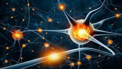 말초신경병증 - 뉴런