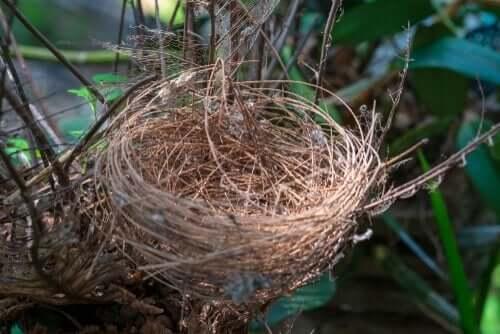정체성에 관한 이야기 - 독수리 둥지