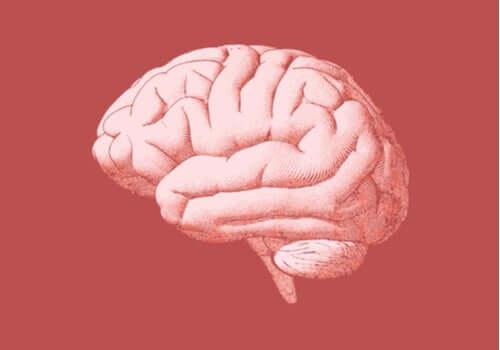 후뇌: 구조와 기능을 알아보자