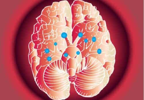 뇌 신경: 놀라운 기능과 작동 방법