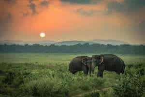슬픈 코끼리 이야기