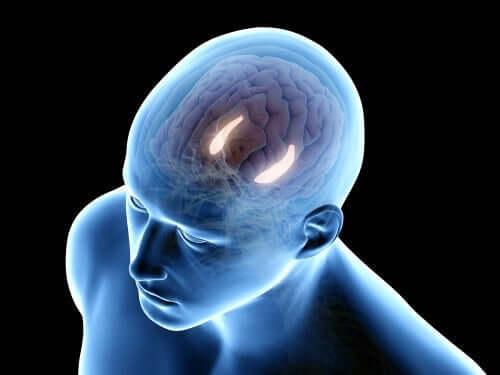 해마의 사람 뇌