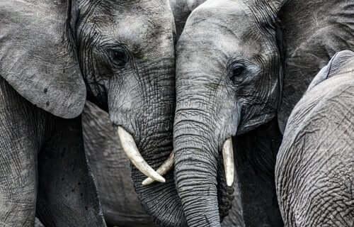 코끼리 보호