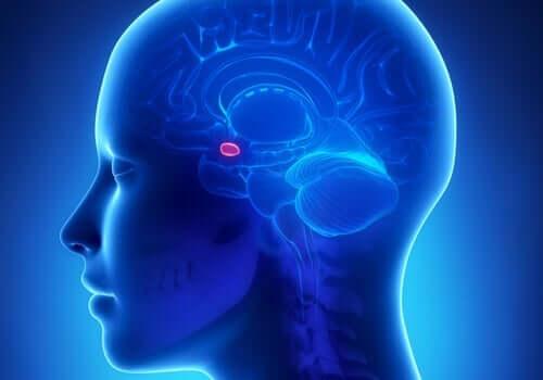 클뤼버 부시 증후군 - 뇌 모습 3
