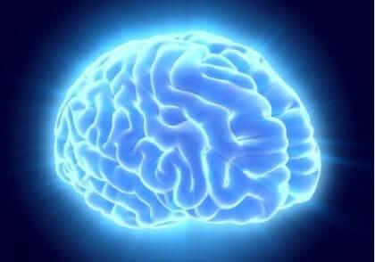 뇌 모습 3