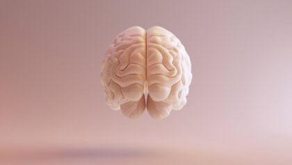 뇌 모습 2