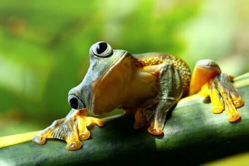 생각해 볼 만한 이야기 - 개구리 5마리