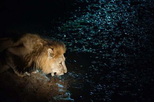 생각해 볼 만한 이야기 - 두려움 많은 사자
