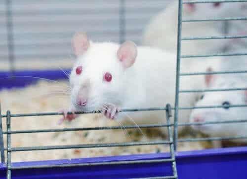 쥐 공원 실험: 중독에 관한 연구