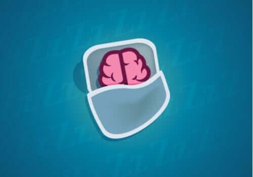 수면 중에 뉴런에서 어떤 일이 발생할까?