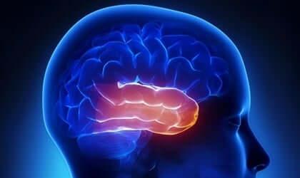 클뤼버 부시 증후군 - 뇌의 모습 2