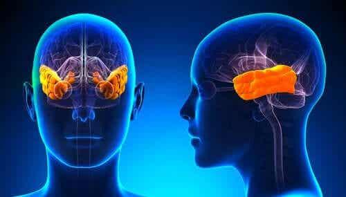 클뤼버-부시 증후군: 공포의 상실