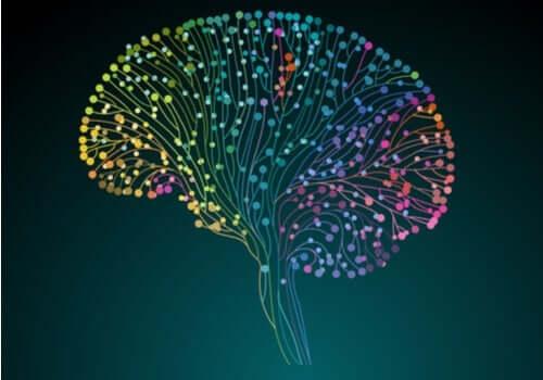 인간 커넥톰 프로젝트: 뇌를 이해하기 위한 연구