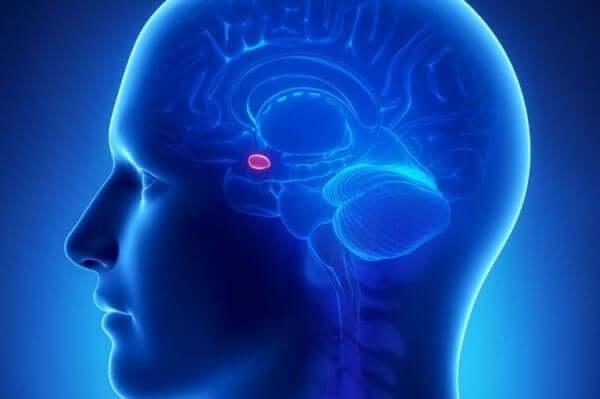 신경 미학: 신경과 예술이 만나는 곳 02