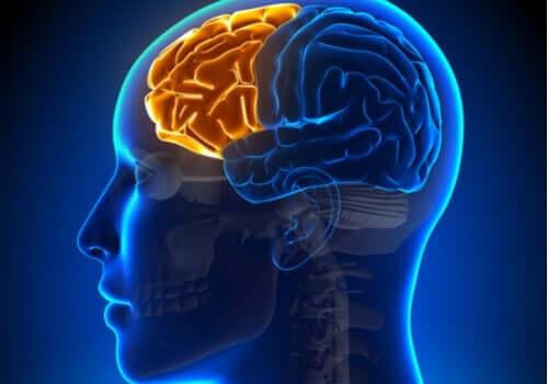 집행기능장애증후군: 전두엽이 실패할 때