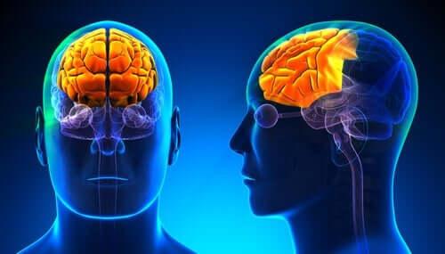 알코올 중독의 신경 생물학