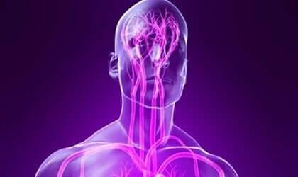 체성신경계의 감각 경로