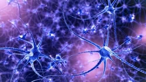뇌 가소성: 특성 및 유형을 알아보자