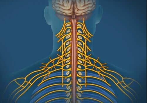 체성신경계: 특성 및 기능을 알아보자