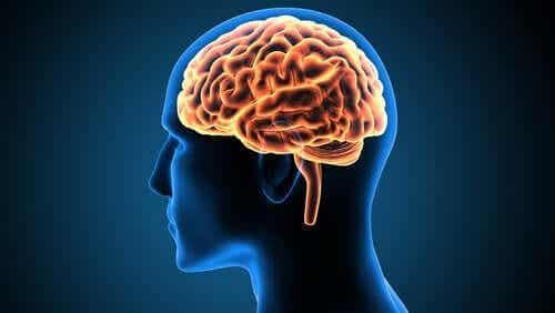 빅터 레보른의 뇌: 신경과학의 사례