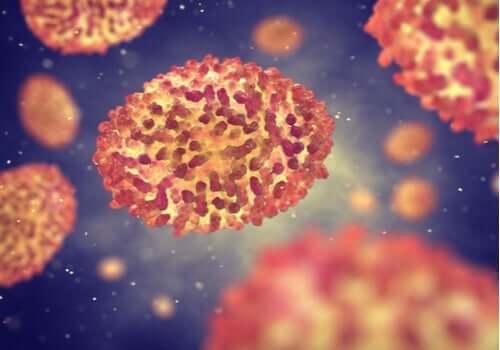 질병의 증상: 바이러스가 퍼지는 방법