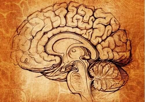 렌즈핵: 학습 및 동기부여의 원천