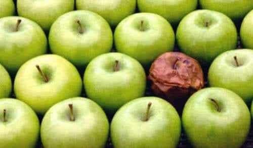 직장에서의 썩은 사과 이론
