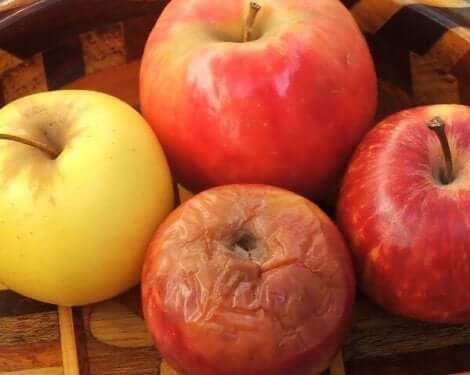 썩은 사과 이론