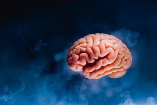 뇌의 해부학