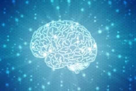 뇌에 관한 속설에는 무엇이 있을까?