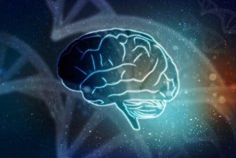 뇌의 해부학 - 전뇌