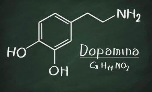 모노아민의 종류: 카테콜아민과 인돌라민