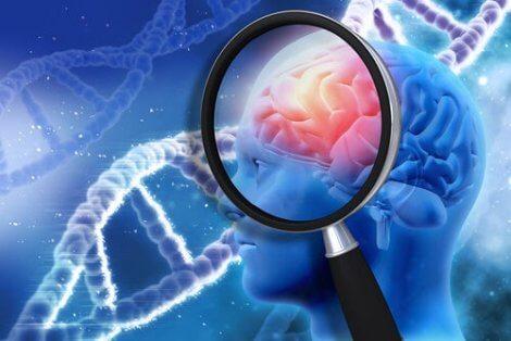 신경심리학적 재활의 맥락 변수