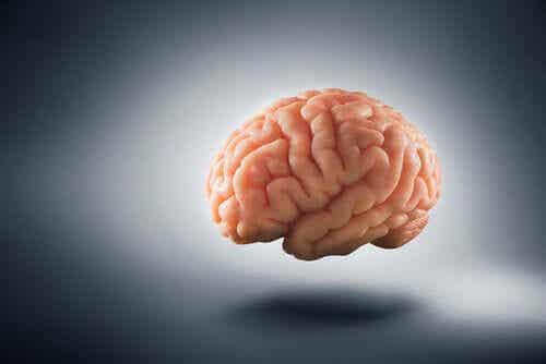 가난이 인간의 뇌를 어떻게 변화시키는가