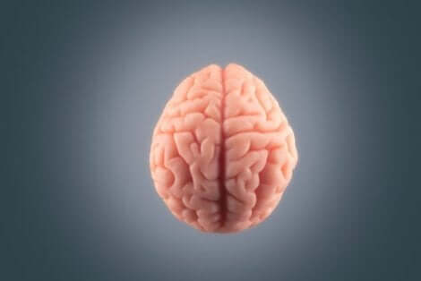 왜 뇌는 통증을 느끼지 않는 것일까?