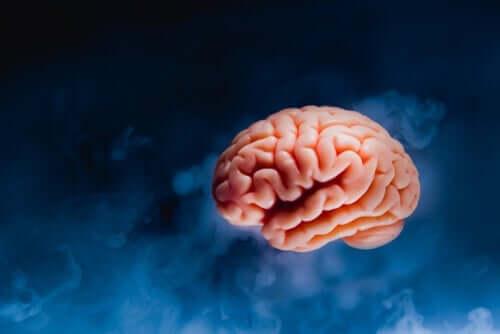왼손잡이의 두뇌: 차이점과 장점