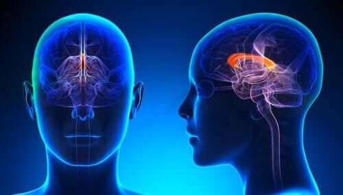 왼손잡이 두뇌의 심리적 특성