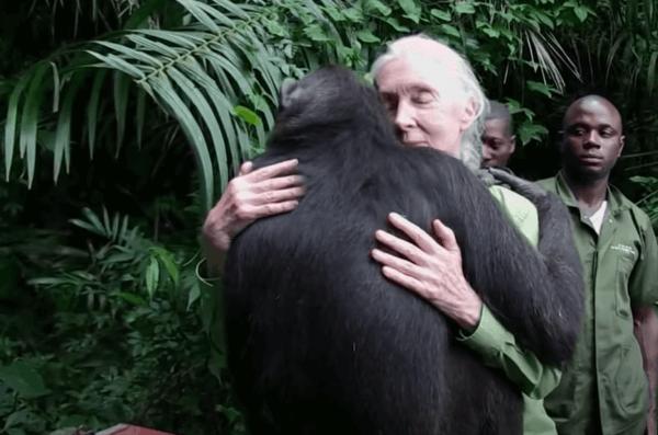 제인 구달: 세계적인 침팬지 전문가의 탄생