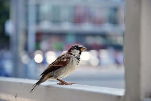 새에 대한 두려움 분석