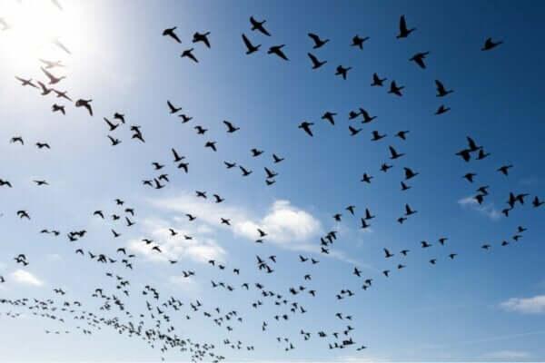 새에 대한 두려움을 극복하는 3가지 방법