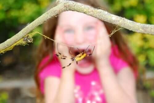 거미 이미지