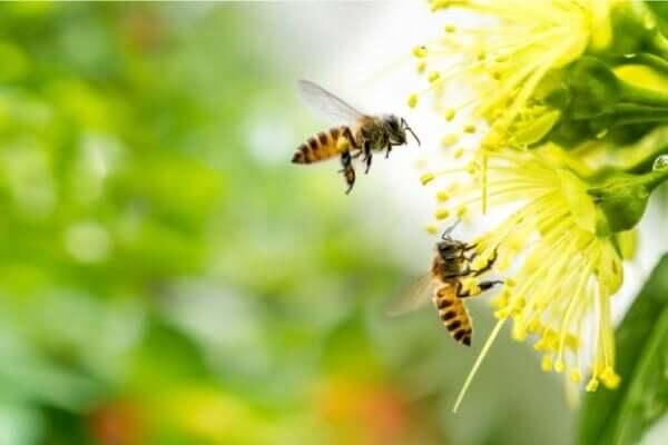 벌 공포증: 증상, 원인 그리고 치료법