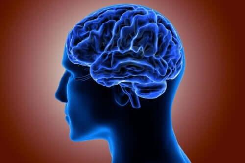 큰 뇌 이랑증 대뇌 피질