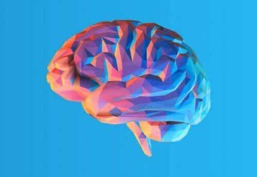 호두껍데기처럼 주름진 뇌 모양 비밀은 무엇일까?